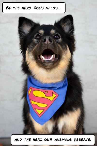 SuperDog2_small