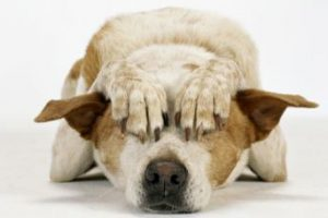 pet-anxiety