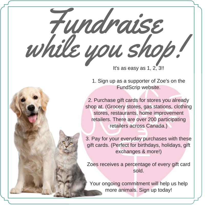 Small Dog Animal Rescue Edmonton