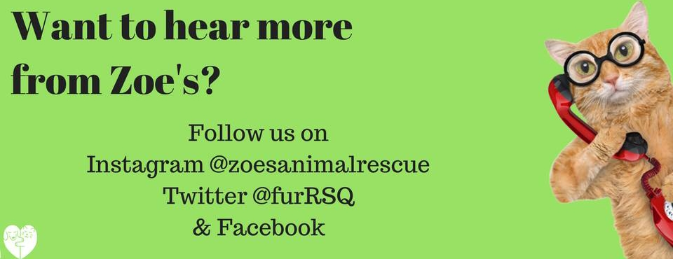 Zoes Animal Rescue Instagram
