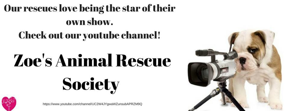 Zoes Animal Rescue YouTube