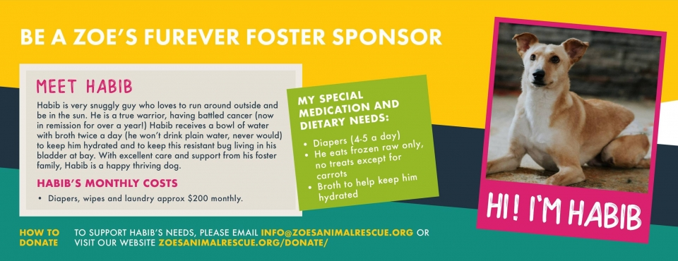Zoe's Animal Rescue – Adopt a Dog or Cat in Edmonton, Alberta
